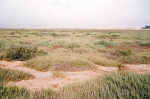 Plaine Aride