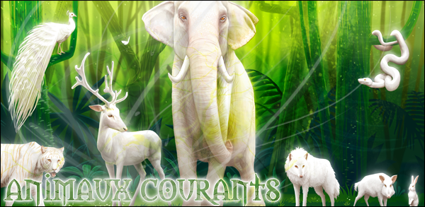 Bestiaire    591700animauxcourants