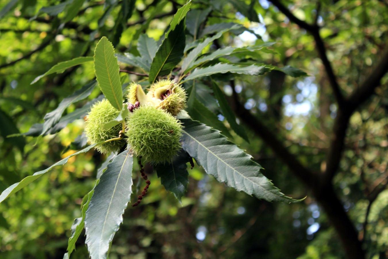 [Fil ouvert] Fruit sur l'arbre - Page 9 593383004Copier
