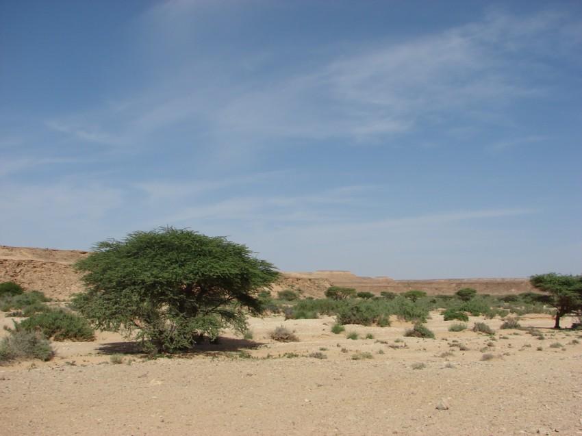 retour maroc 2012 - Page 2 595519051