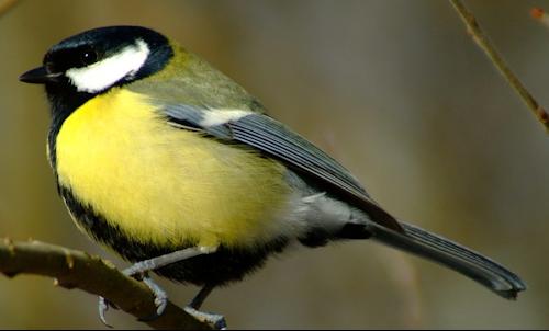 Tubes rapasse et oiseaux 598006Mellmelgibson114