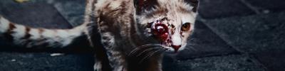 La Guerre des Clans : Magic Cats 599161image