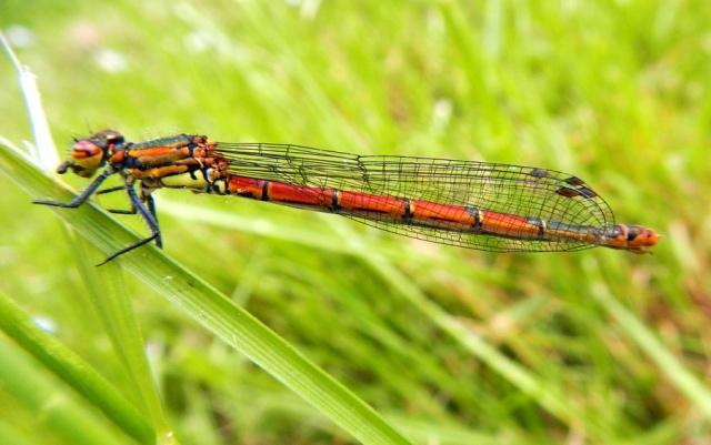 Jeux des insectes fossilisés 2 600143DSCN0945