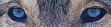 Wolf Moon (RPG lupin) 602487pSKYLER
