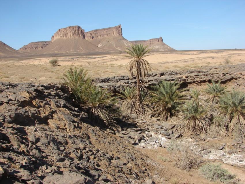 Le Grand Sud du Maroc - II 604020145