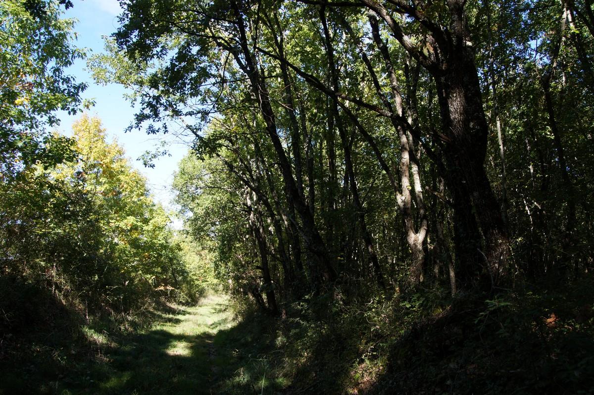 [fil ouvert] la forêt dans tous ses états - Page 14 605320DSC07705