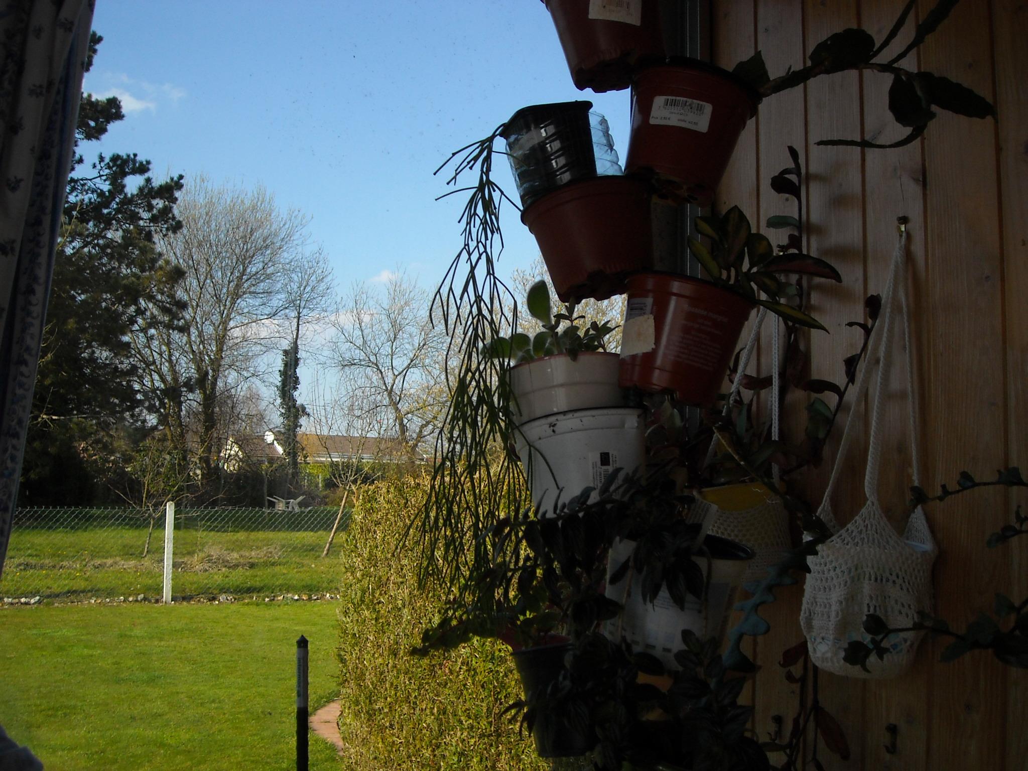 un aperçue de mes autres plantes 607925plantegrasse005