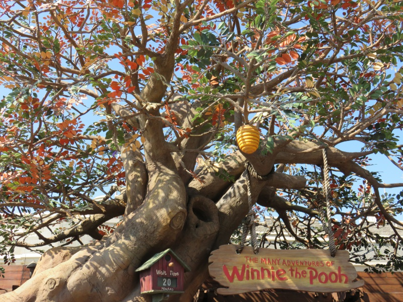 Walt Disney World + Universal Studios + Sea World + Busch Gardens Summer 2014 - Page 2 611878IMG0480