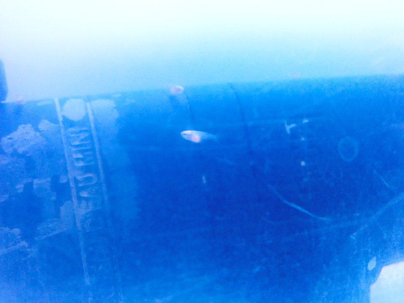 F2 - VL HMDT bleu x VL HM bleu roi 613639IMG20151027081516copie