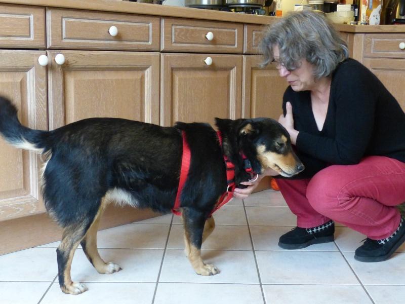 Negrutza, un amour de chienne, 2 ans environ - Page 2 614070P1030237