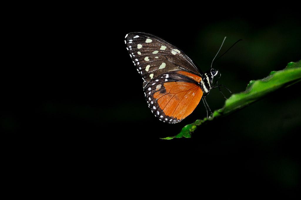 Fil ouvert - Proxi - Papillons - Page 2 617236DSC2558