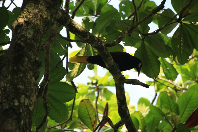 Nature au Costa Rica 618276IMG6367