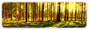 La Forêt des Centaures