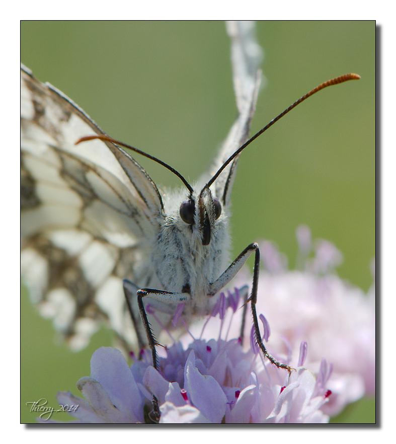 Fil ouvert - Proxi - Papillons 619593macro38