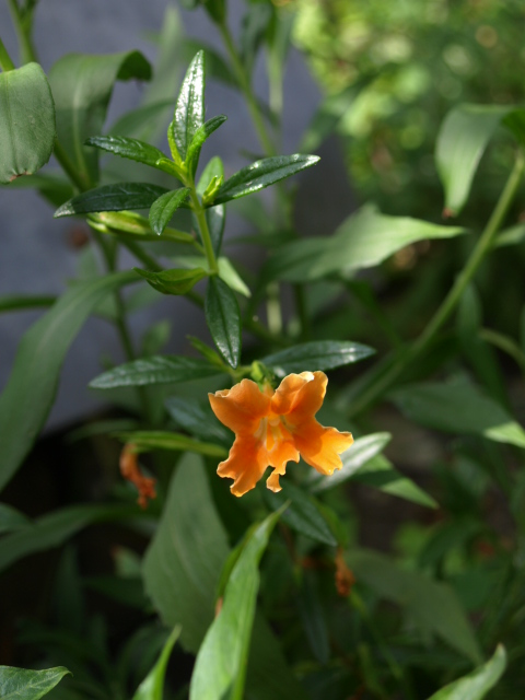 jolie fleur orange 622414P7048890
