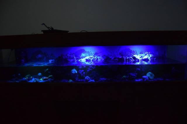 Le nouveau bac du Poissonpané : aquaterrarium de 900L / Nouvelle Calédonie - Page 2 622611DSC0087