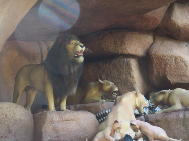 Walt Disney World + Universal Studios + Sea World + Busch Gardens Summer 2014 - Page 4 624034IMG0815