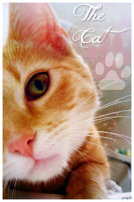 ~¤*Ma galerie*¤~ 627956thecat2