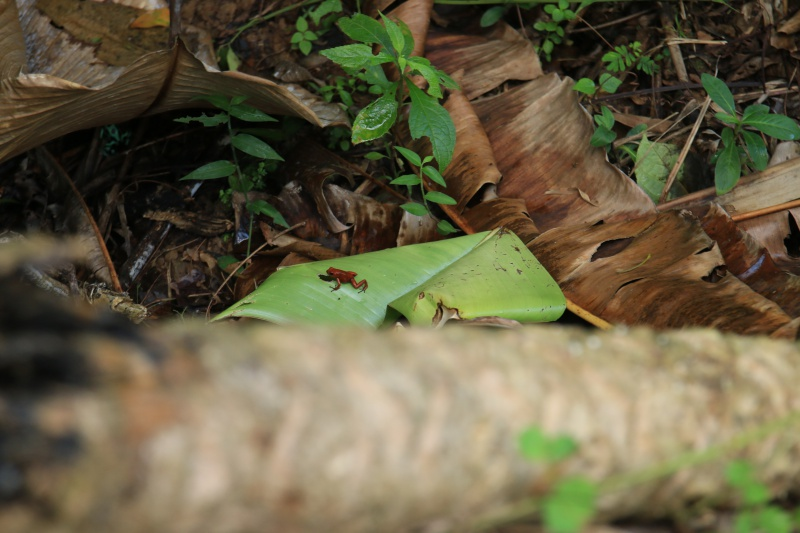 Nature au Costa Rica 628006IMG6378