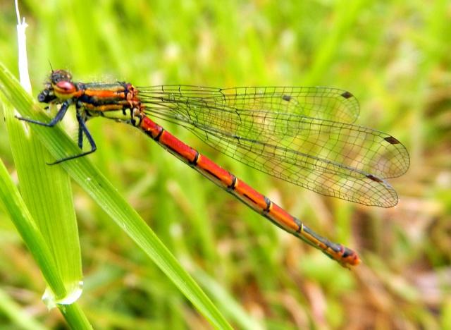 Jeux des insectes fossilisés 2 628845DSCN0942