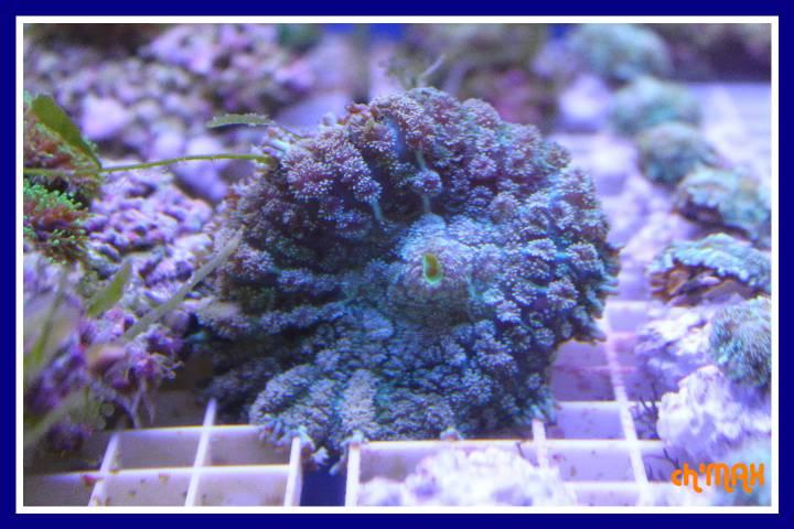 ce que j'amène en coraux a orchie  630777PXRIMG0051GF