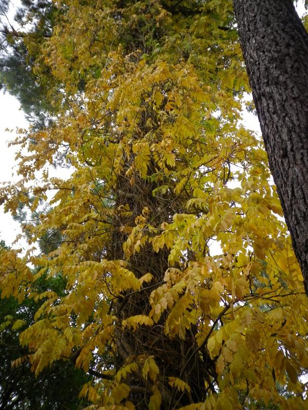 Couleurs d'automne, petit moment d'émerveillement 632855IMGP4195