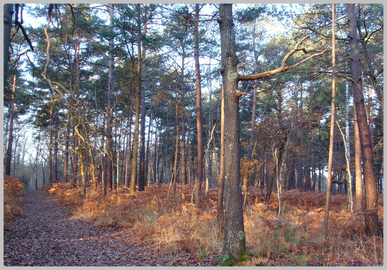 [fil ouvert] la forêt dans tous ses états - Page 10 638909DSC011617