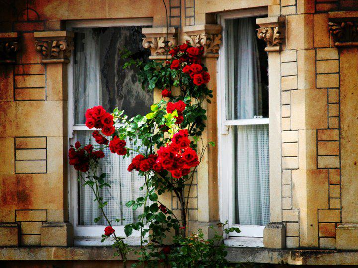 Des fenêtres d'hier et d'aujourd'hui. - Page 3 641105720854408849959474471087812700n
