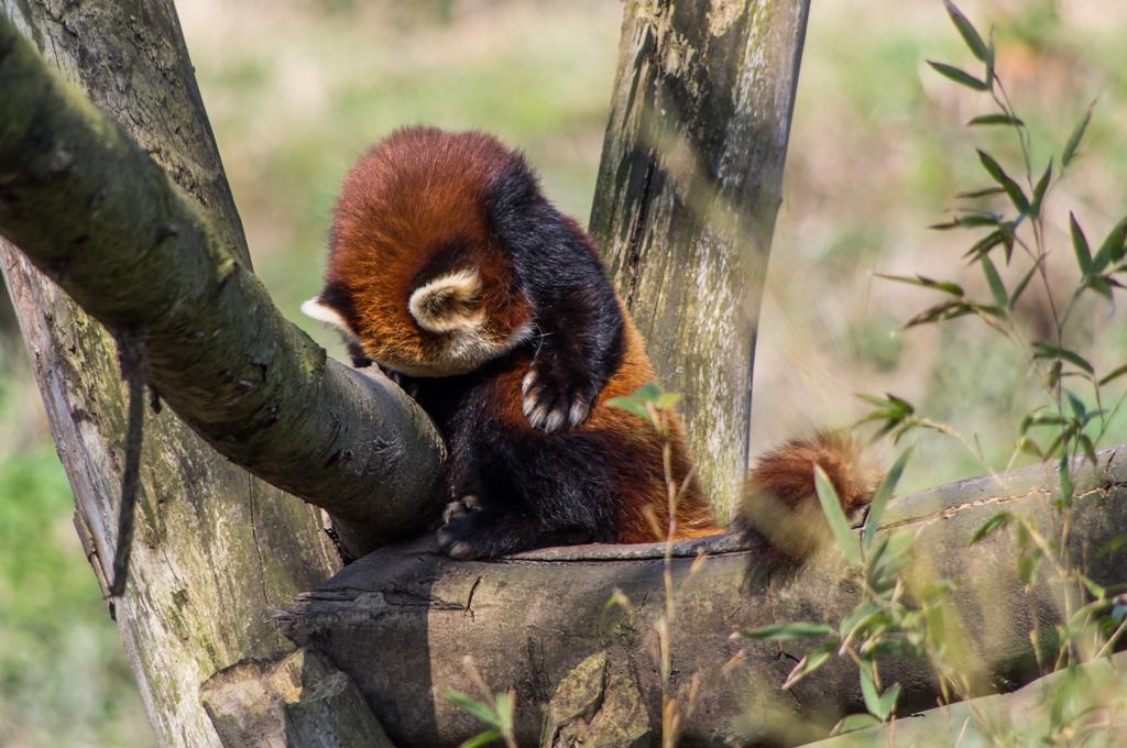 Zoo de Lille 644638IGP3789