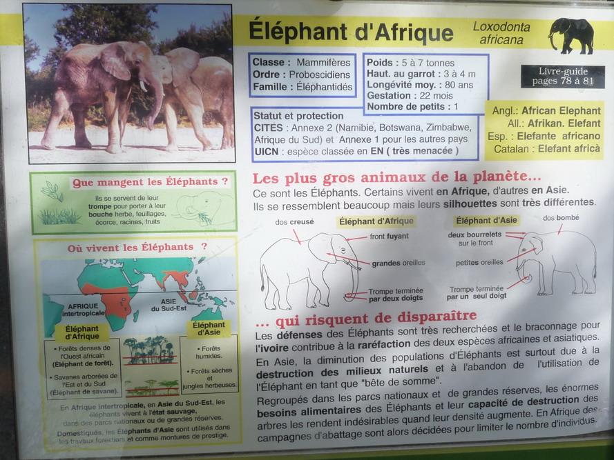 """NARBONNE EN PASSANT PAR LA RESERVE AFRICAINE DE SIGEAN C"""" EST  DROLEMENT FUN - Page 4 646108P1180317"""
