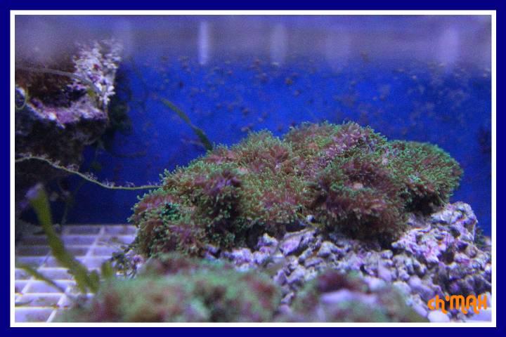 ce que j'amène en coraux a orchie  648517PXRIMG0026GF