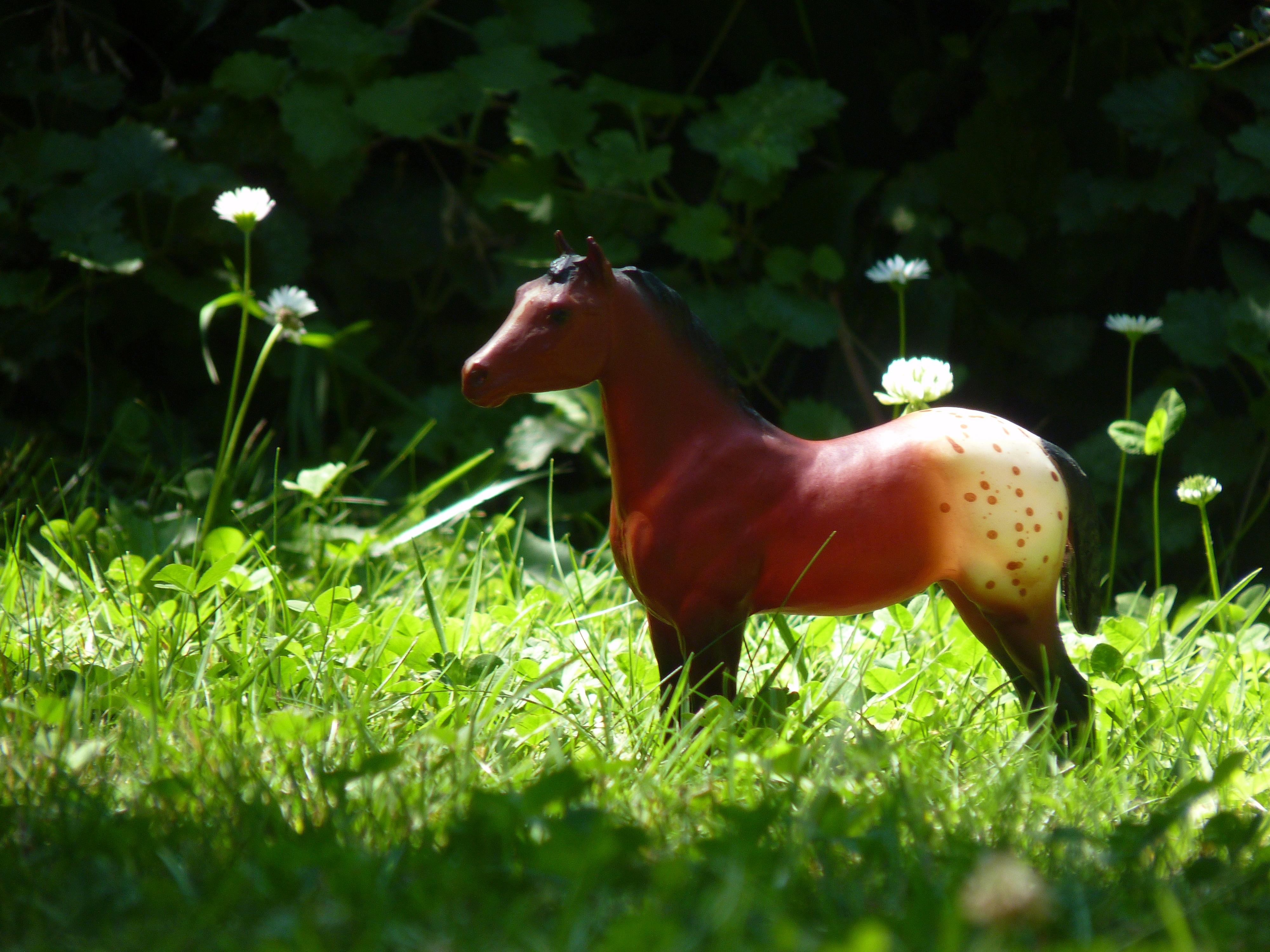 les chevaux de l'écurie Du vieux porche, bienvenue dans ce refuge miniature - Page 2 650946P1060536