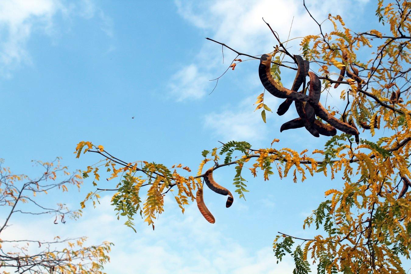 [Fil ouvert] Fruit sur l'arbre - Page 9 653423095Copier