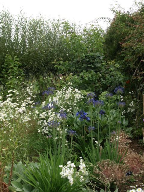 le jardin des plantes du mourot 658618P7202021