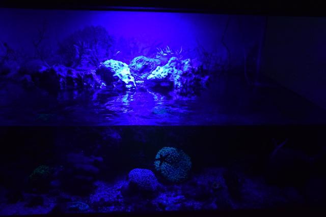 Le nouveau bac du Poissonpané : aquaterrarium de 900L / Nouvelle Calédonie - Page 2 661166DSC0086