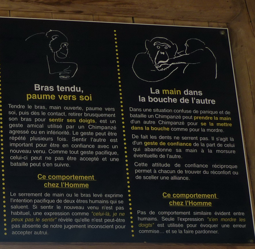 """NARBONNE EN PASSANT PAR LA RESERVE AFRICAINE DE SIGEAN C"""" EST  DROLEMENT FUN - Page 5 662618P1180324"""