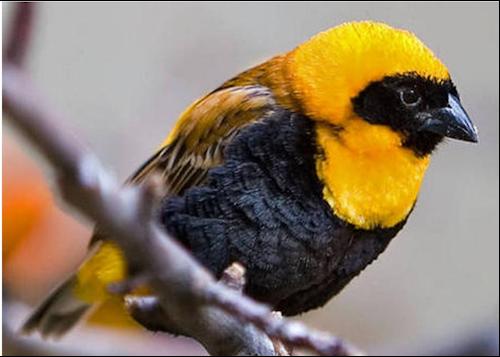 Tubes rapasse et oiseaux 664816Mellmelgibson119