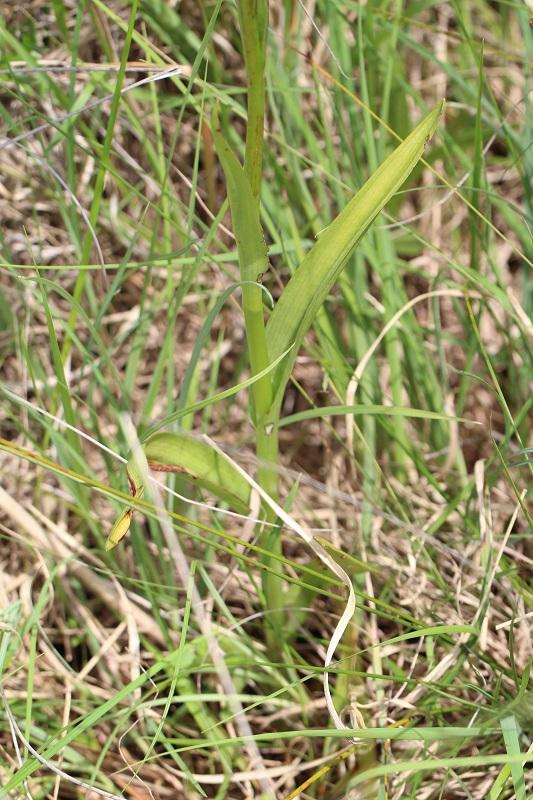 dactylorhiza de la brenne - Page 2 665790IMG5335