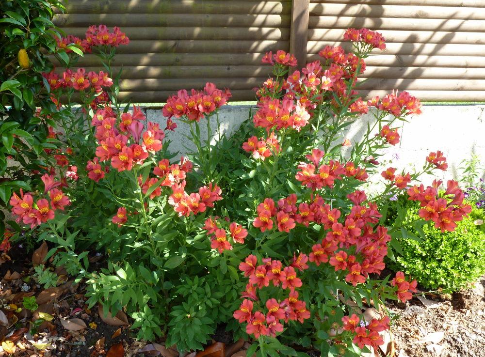 quelques plantouilles au jardin... 667868914