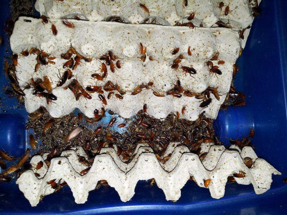 Elevage d'insectes en photos... Pourquoi pas?! 6682252614