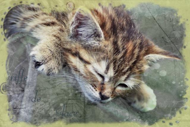 PUB, Forum War\'of Cats  673091645570toonicewhensleepbybanbi