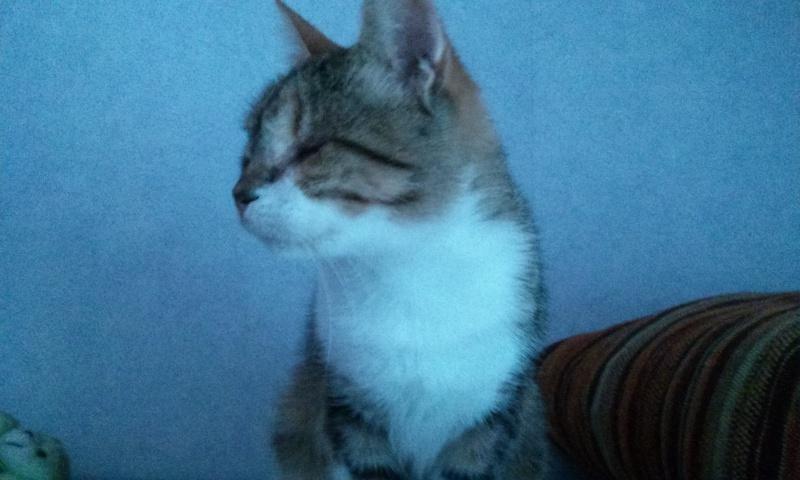 DUCHESSE - chatte femelle, née 2011/2012, borgne - (PASCANI) - adoptée par Chantal Pascal (dpt 63) - Page 4 67589866