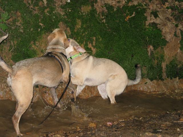 Lila, adorable chienne croisée, née en octobre 2011 678620IMG9352