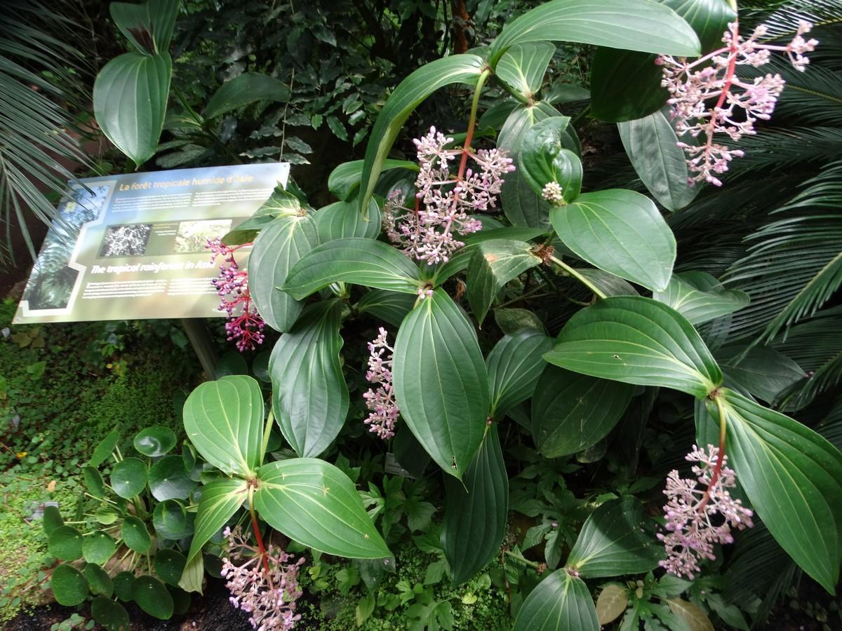 [Fil ouvert] Fleurs et plantes - Page 6 680894052Copier