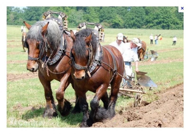 Petite histoire de l'énergie, son rôle en agriculture dans l'histoire - Page 2 683894Chevallabour1
