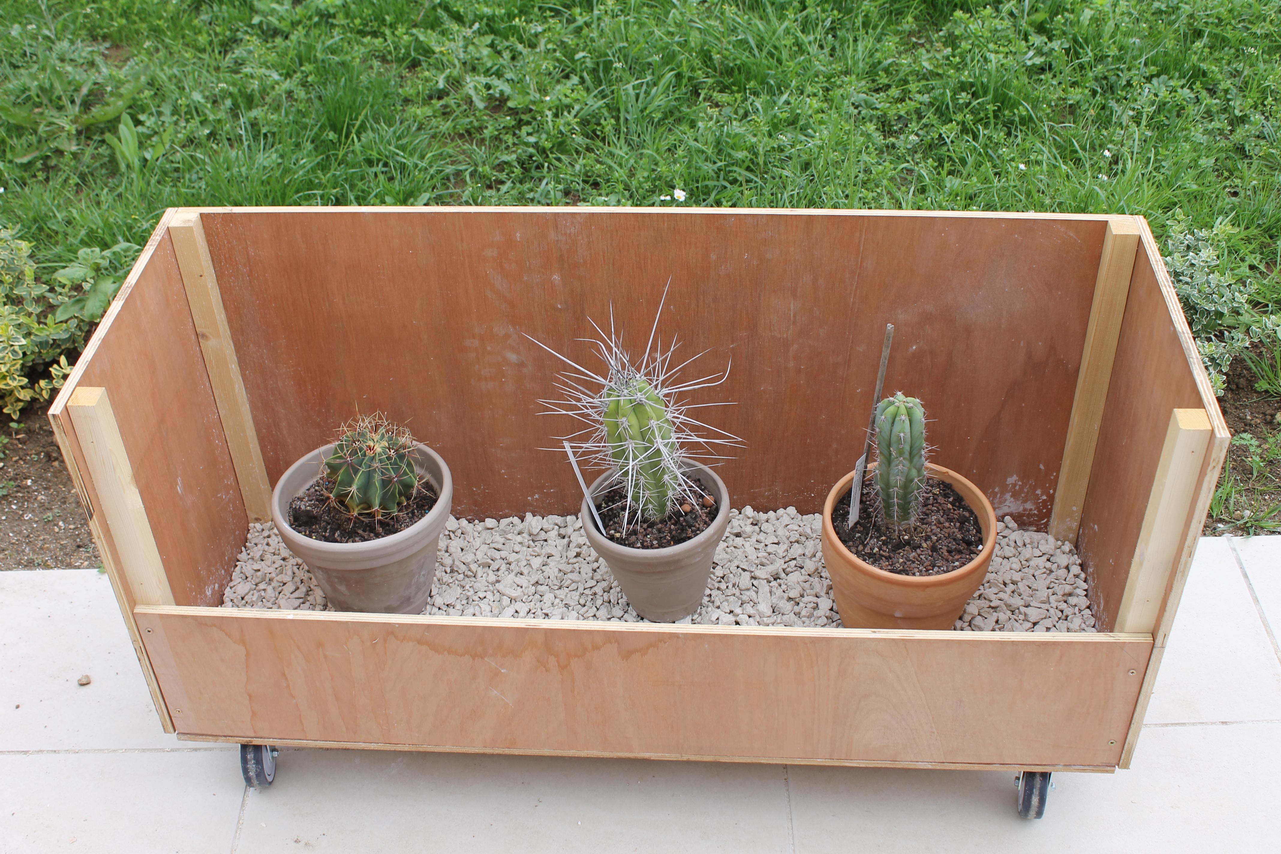 Mon coffre a cactus! 686796Modifile28Mai2014