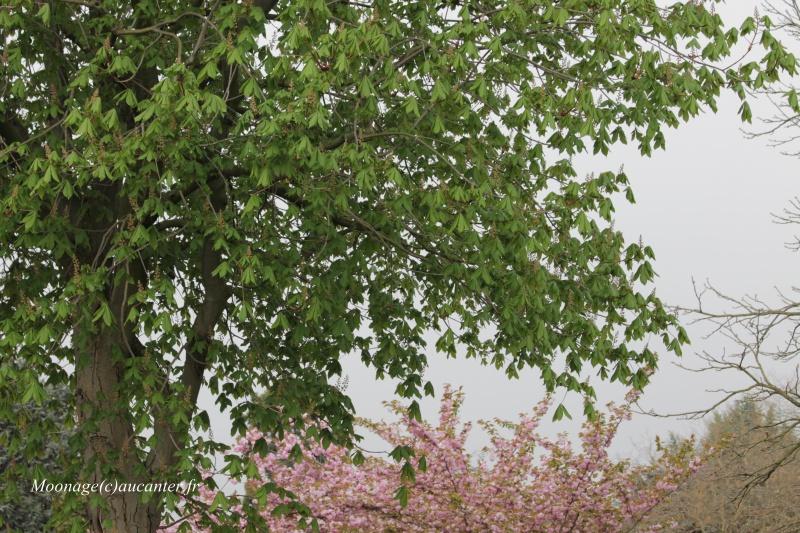 Photos Auteuil 27-04-2016 687047IMG0900
