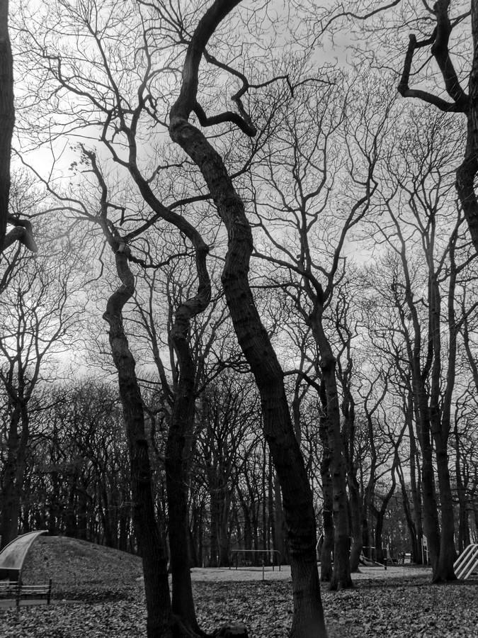[fil ouvert] la forêt dans tous ses états - Page 13 688431026Copier