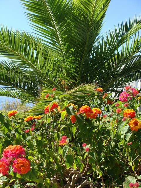 jardin du sud - Page 2 690016l_015