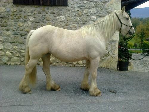 On juge vos chevaux au modèle - Page 2 691354VGProfilDroit